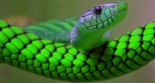 صور تفسير حلم الثعابين فى البيت , ماالذى يرمز الى رؤية الثعابين فى المنام