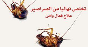 بالصور القضاء على الصراصير , كيفية التخلص من الحشرات الضارة 3642 3 310x165