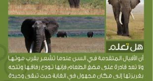 صور هل تعلم عن الحيوانات , للحيوانات انواعا مختلفه