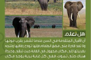 صورة هل تعلم عن الحيوانات , للحيوانات انواعا مختلفه