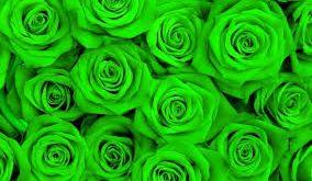 صورة خلفية خضراء , اروع الصور لخلفيات خضراء