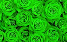 بالصور خلفية خضراء , اروع الصور لخلفيات خضراء 4716 12