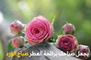صور احلى صور صباح الخير , صباح الخير وصور مختلفه 2019