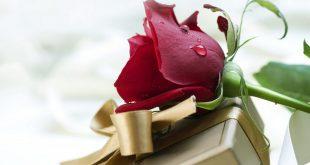 صور ورد رومانسيه , رومنسيات في صور مع ورود