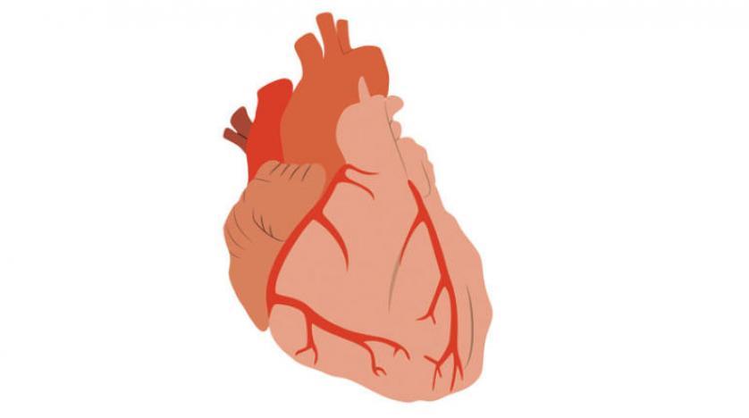بالصور ارتفاع نبضات القلب , تعرف علي زياده ضربات القلب 11378 11