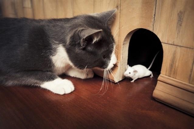 صورة رؤية الفئران الميتة في المنام , تفسير الحلم بفئران ميتة