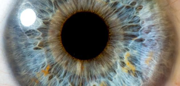 صور مكونات العين , اهم مكونات العين