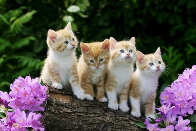 صورة القط في المنام , القطط وتفسيرها في المنام 11432 1