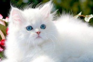 صور القط في المنام , القطط وتفسيرها في المنام