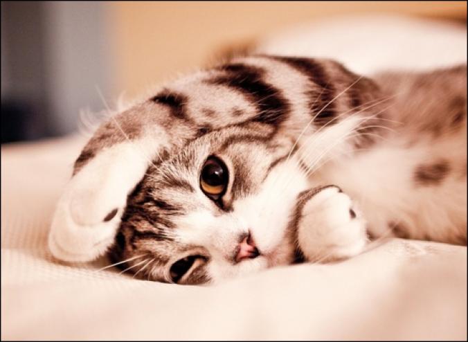 صورة القط في المنام , القطط وتفسيرها في المنام 11432