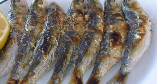 صور فوائد سمك السردين , السردين وسحره الخاص