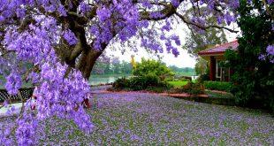 صورة ابيات شعر عن فصل الربيع , اشعار فى جمال فصل الربيع
