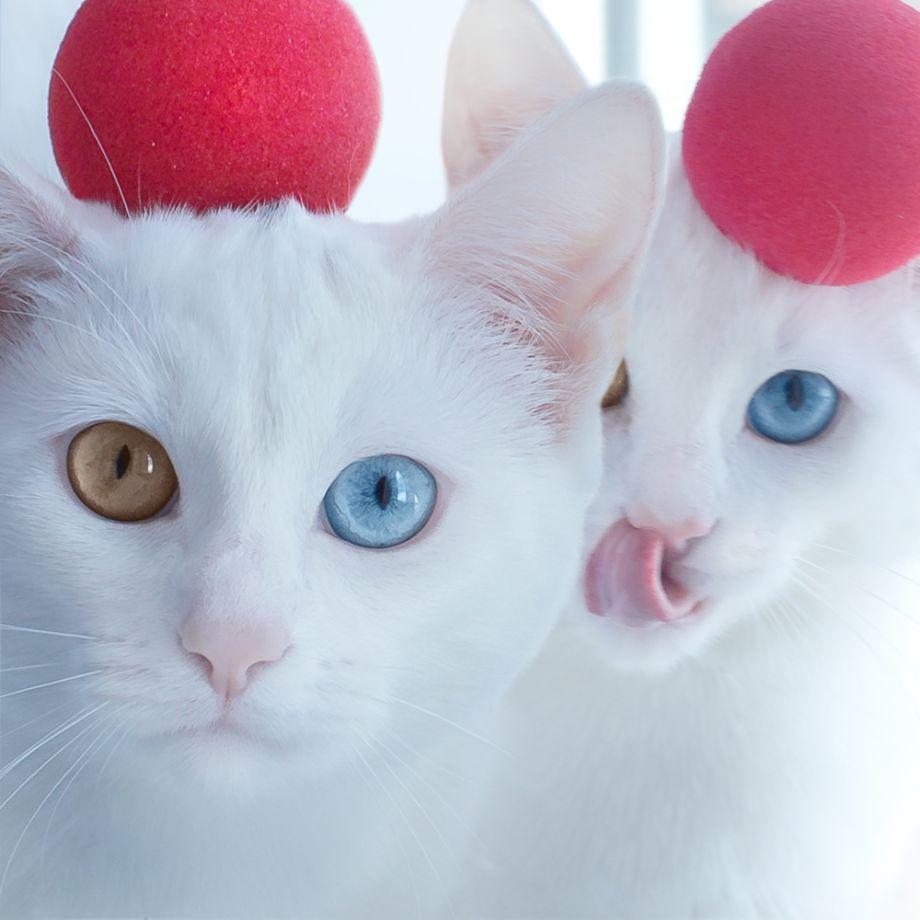 صورة قطط جميلة , اجمل وارق صور للقطط تجنن 5205 1