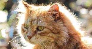 صورة قطط جميلة , اجمل وارق صور للقطط تجنن