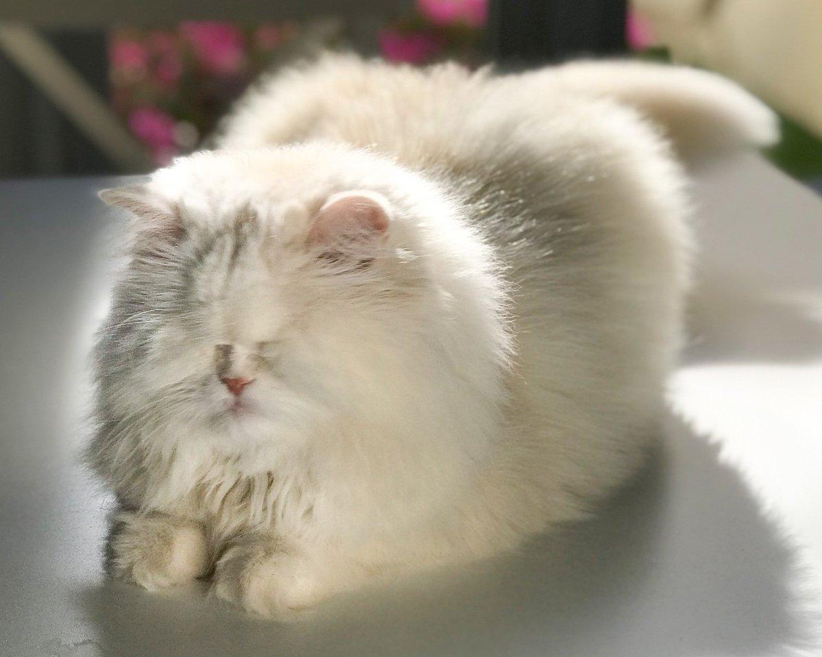 صورة قطط جميلة , اجمل وارق صور للقطط تجنن 5205 2