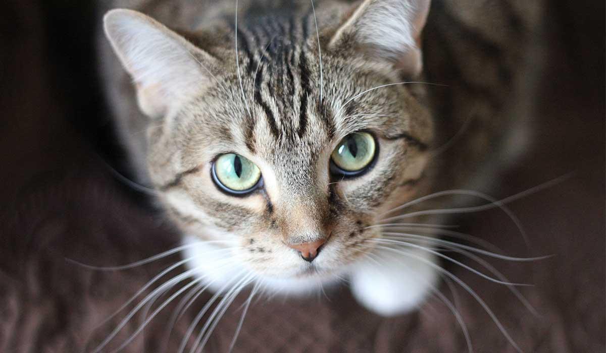 صورة قطط جميلة , اجمل وارق صور للقطط تجنن 5205 4