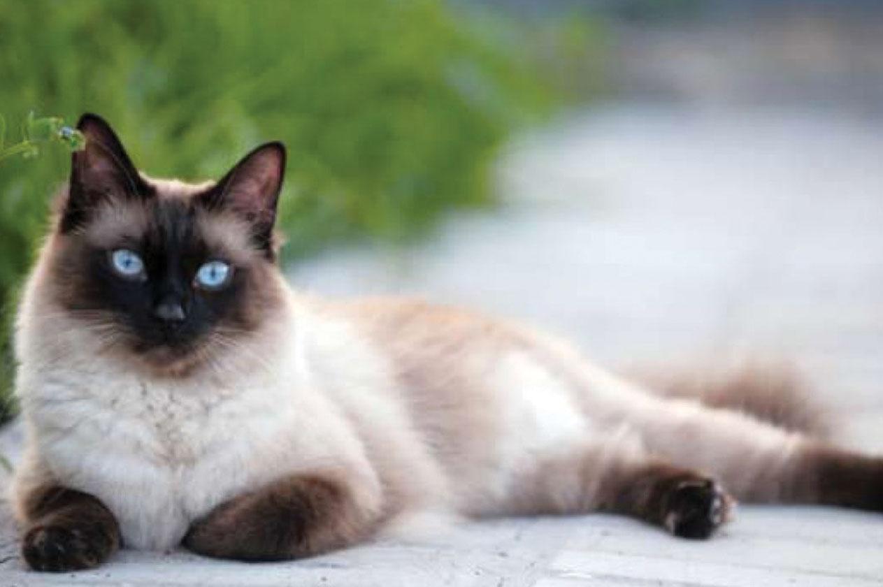 صورة قطط جميلة , اجمل وارق صور للقطط تجنن 5205 5