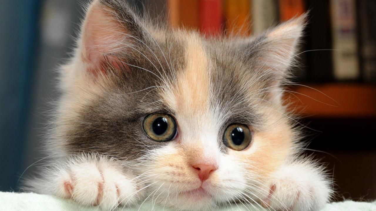 صورة قطط جميلة , اجمل وارق صور للقطط تجنن 5205 6