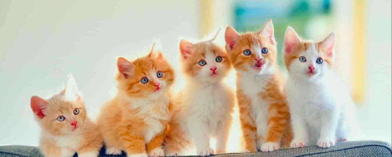 صورة قطط جميلة , اجمل وارق صور للقطط تجنن 5205 7