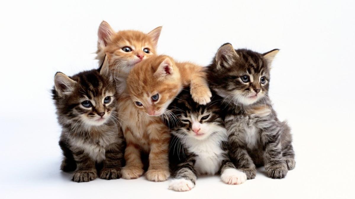 صورة قطط جميلة , اجمل وارق صور للقطط تجنن 5205 8