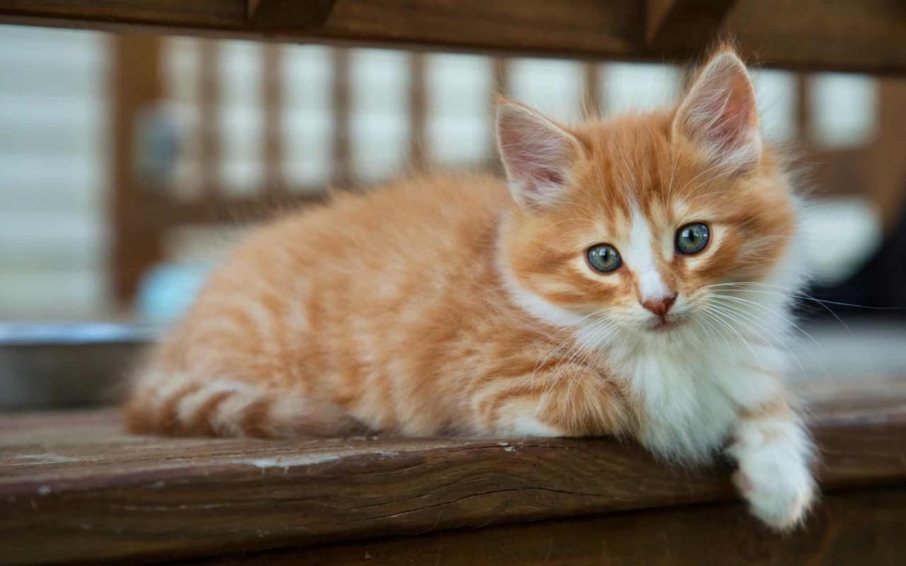 صورة قطط جميلة , اجمل وارق صور للقطط تجنن 5205 9