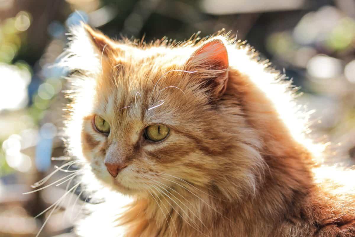 صورة قطط جميلة , اجمل وارق صور للقطط تجنن 5205