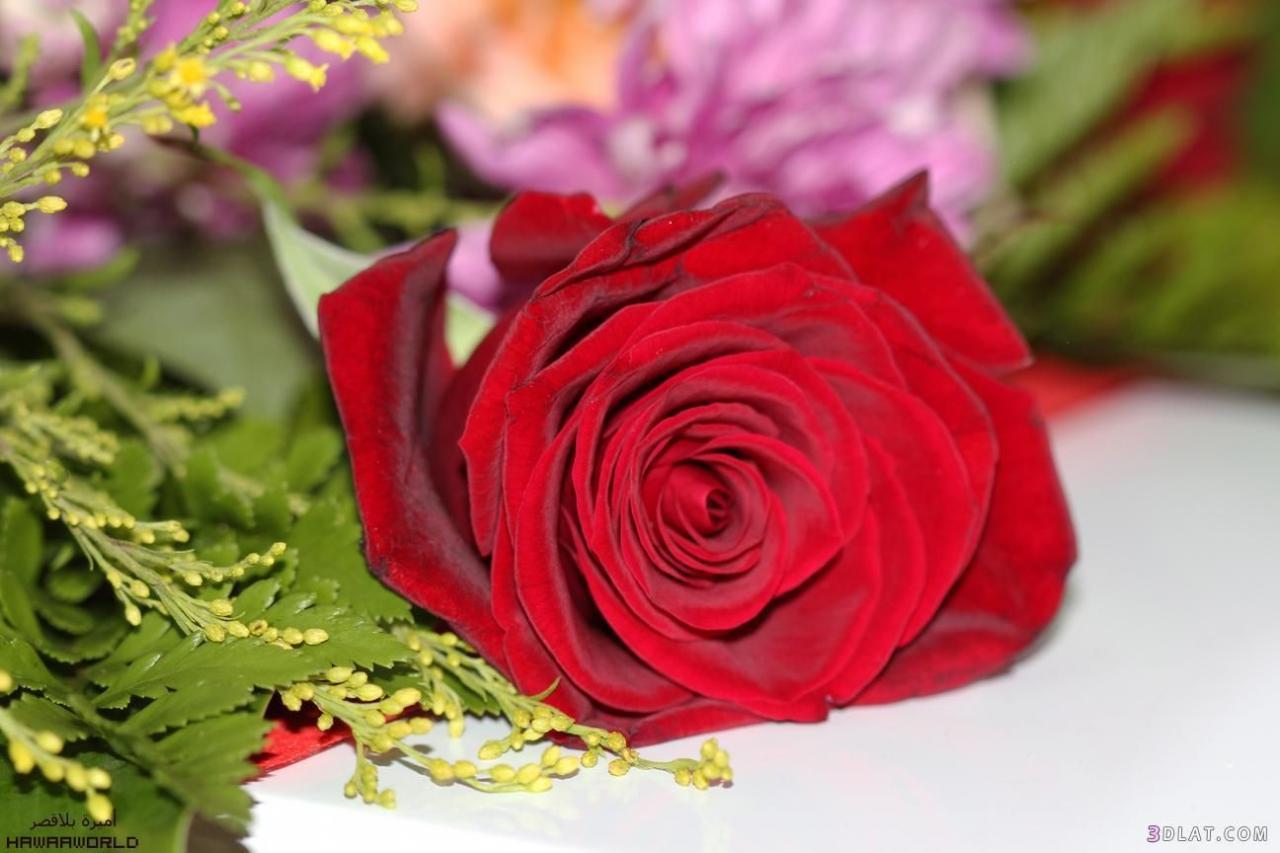 صورة باقات زهور , اجمل الورود تهادي بيها حبابيك 6309 1