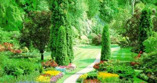 صورة صور فصل الربيع , الدنيا ربيع والجو بديع