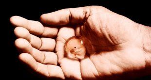اجهاض الجنين , اسرع طريقة للتخلص من الجنين