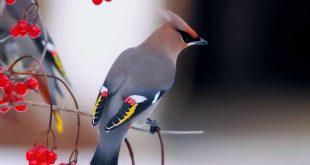 صورة صور عصافير , اجمل واروع صور للعصافير