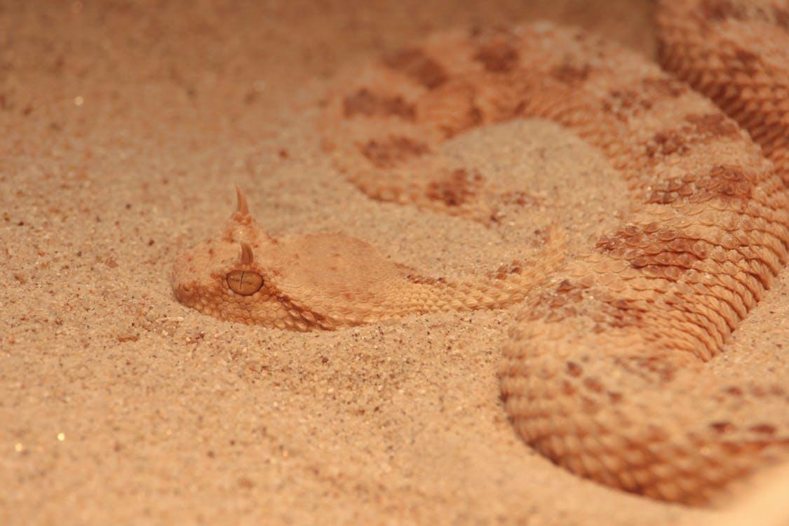 صورة تفسير حلم الثعبان , تفسير رؤية الثعبان فى المنام