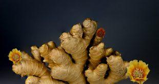 صورة ما هي فوائد الزنجبيل , القيمة الغذائية للزنجبيل