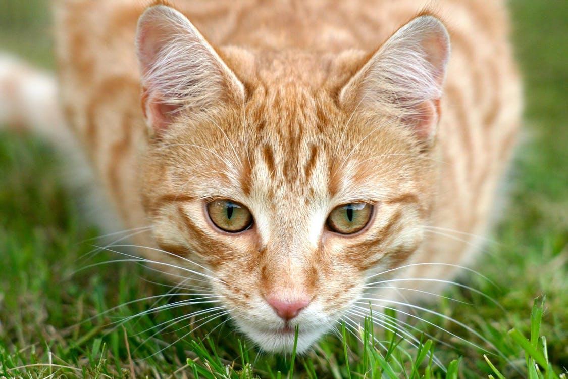 صورة صور قطط صغيرة , صور قطط كيوت