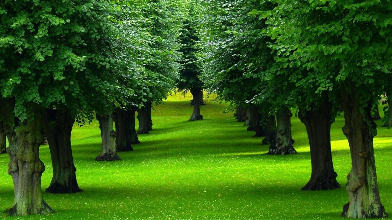 صورة صور اشجار طبيعية , صور اشجار طبيعية جذابة جدا 😉
