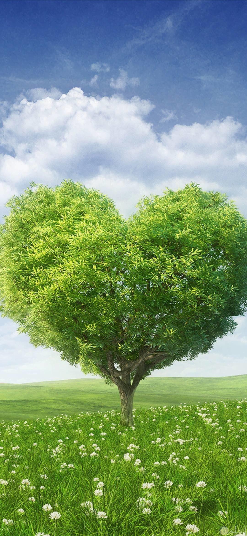 كلانسي تميز التزام صورة شجرة جميلة Thibaupsy Fr