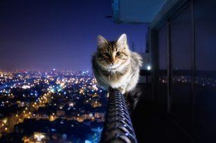 صورة افضل الصور في العالم , من اجمل الصور اللي ممكن تشوفوها