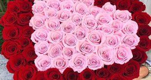 صورة صور اجمل ورد , الورد وطبيعته الجذابة صور تجنن ❤️