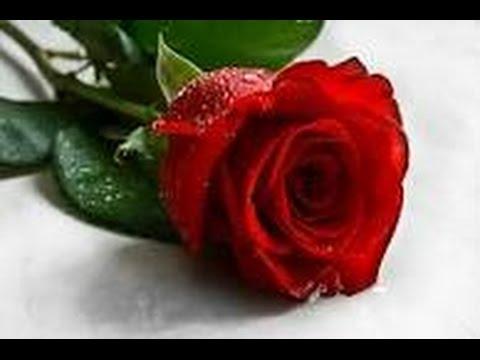 صورة صور اجمل ورد , الورد وطبيعته الجذابة صور تجنن ❤️ 6504 3