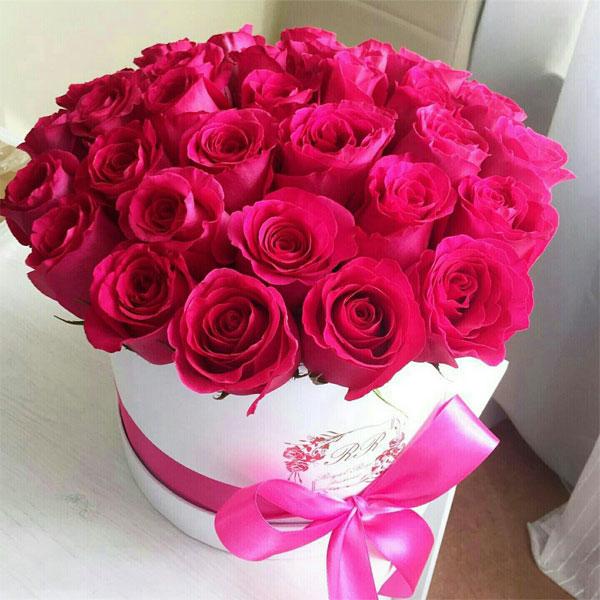 صورة صور اجمل ورد , الورد وطبيعته الجذابة صور تجنن ❤️ 6504 5