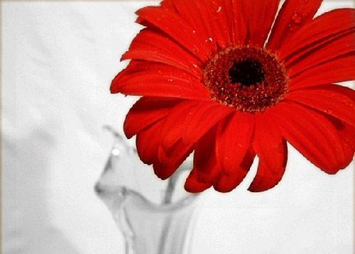 صورة صور اجمل ورد , الورد وطبيعته الجذابة صور تجنن ❤️ 6504 7