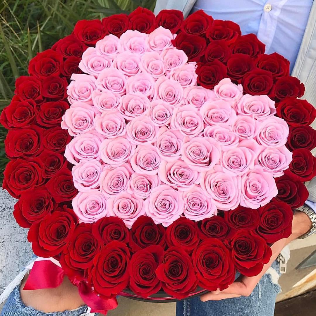 صورة صور اجمل ورد , الورد وطبيعته الجذابة صور تجنن ❤️ 6504