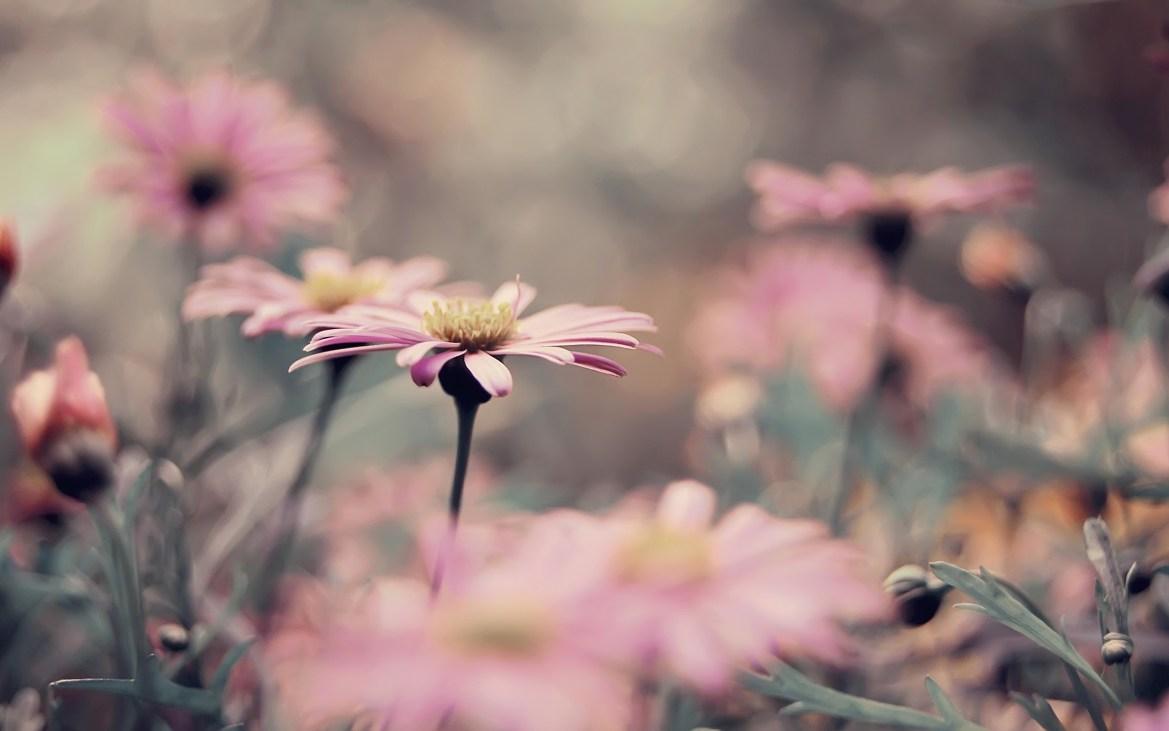 زهرة جميلة بلون وردي
