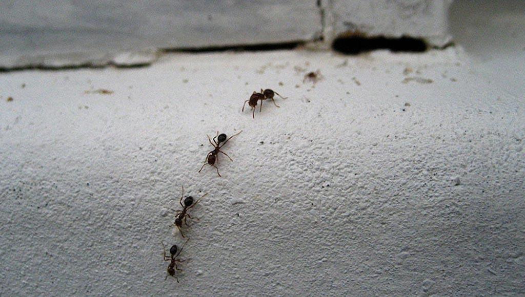 صورة ازاي تحافظي علي بيتك من الحشرات , طرق الحفاظ على المنزل من الحشرات