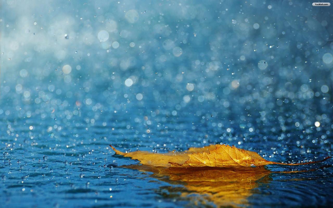 صورة خلفيات مطر , واو على حلاوة خلفية المطرة 406 8