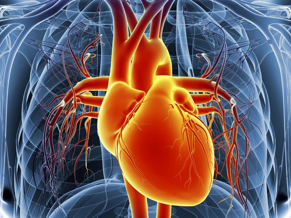 صورة اعراض امراض القلب , مسببات وظهور مرض القلب 624 1