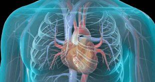 صورة اعراض امراض القلب , مسببات وظهور مرض القلب