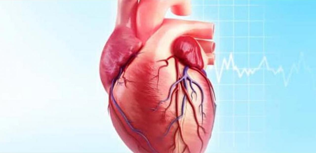 صورة اعراض امراض القلب , مسببات وظهور مرض القلب 624 2