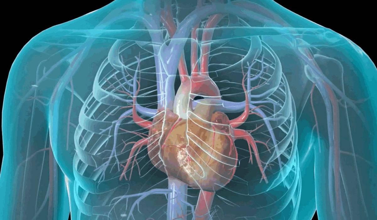 صورة اعراض امراض القلب , مسببات وظهور مرض القلب 624