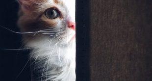كنت بخاف منها بس بعد ما شوفت صورتها حبيتها جدا , صور قطط متحركة
