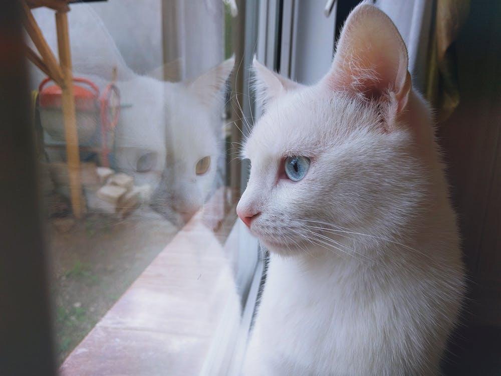 صورة كنت بخاف منها بس بعد ما شوفت صورتها حبيتها جدا , صور قطط متحركة
